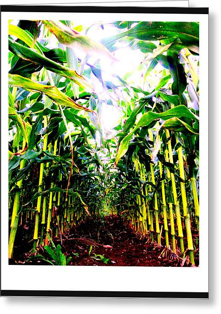 Maine Agriculture Greeting Cards - Corn Greeting Card by Kara Ray