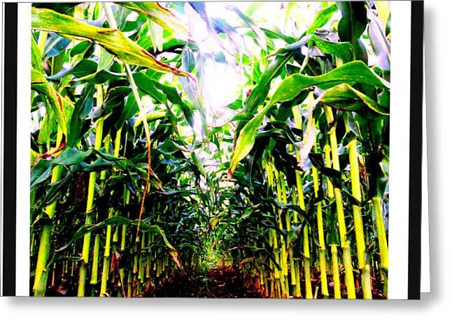 Corn Greeting Card by Kara Ray
