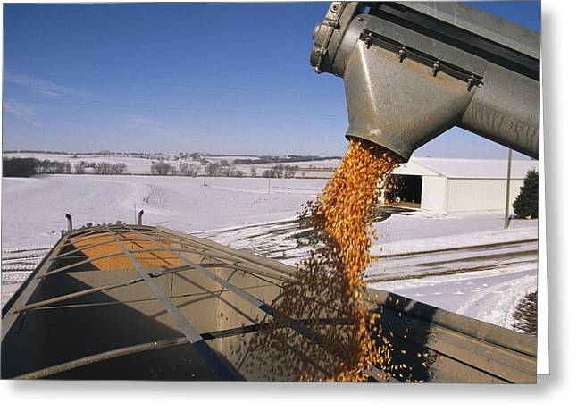 Rural Snow Scenes Greeting Cards - Corn Pours From An Auger Into A Grain Greeting Card by Joel Sartore