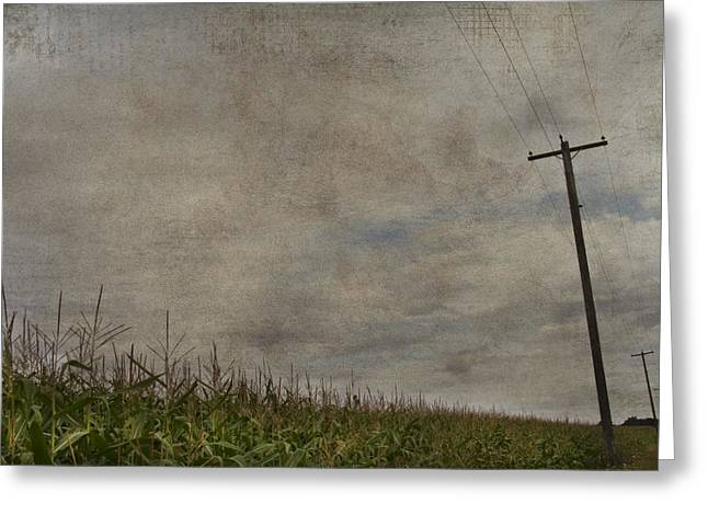 Cornfields Greeting Cards - Corn Greeting Card by Rebecca Cozart