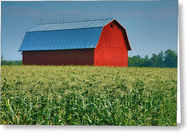 Farm Framed Prints Greeting Cards - Cornfield and Red Barn Greeting Card by Steven Ainsworth