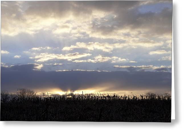 Cornfield Digital Art Greeting Cards - Cornfield Sunrise Greeting Card by Bill Cannon