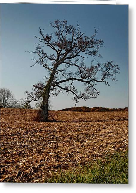 Cornfield Greeting Cards - Cornfield Tree Greeting Card by Murray Bloom