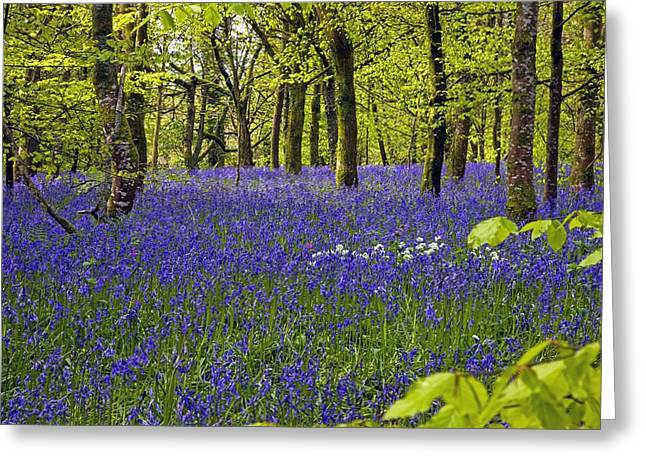Green Foliage Greeting Cards - Cornwall Llanhydrock Gardens Greeting Card by Dr Keith Wheeler