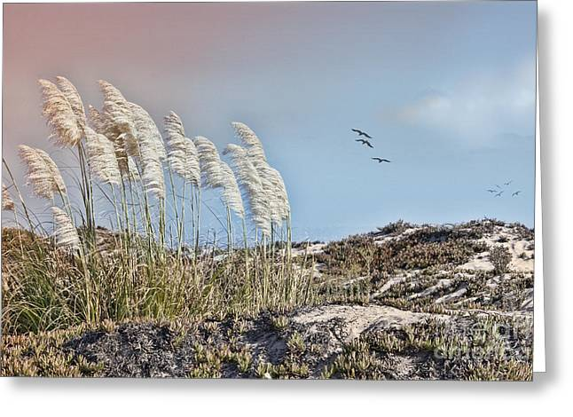 Pampas Grass Greeting Cards - Coronado Island Pampas Grass Greeting Card by Betty LaRue