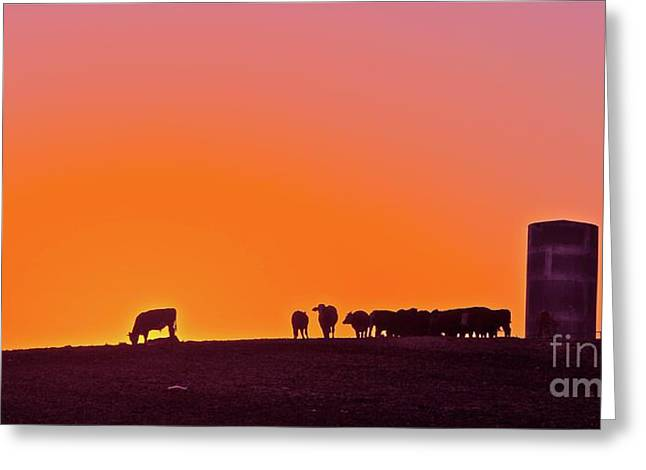 Corral Greeting Cards - Corral Number 5 Greeting Card by Gus McCrea