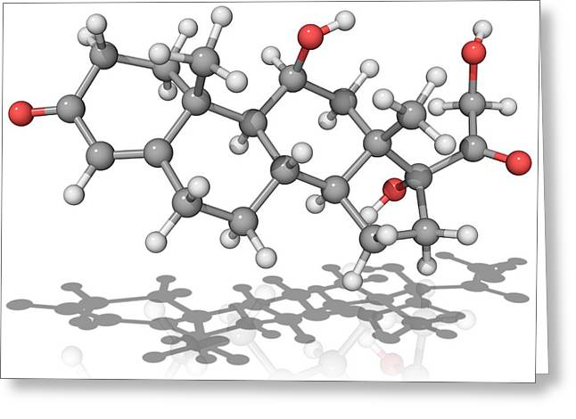 Hydrocortisone Greeting Cards - Cortisol Hormone, Molecular Model Greeting Card by Laguna Design