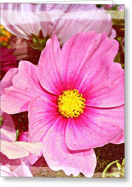 Oregon Flowers Greeting Cards - Cosmo Flower Greeting Card by Cathie Tyler