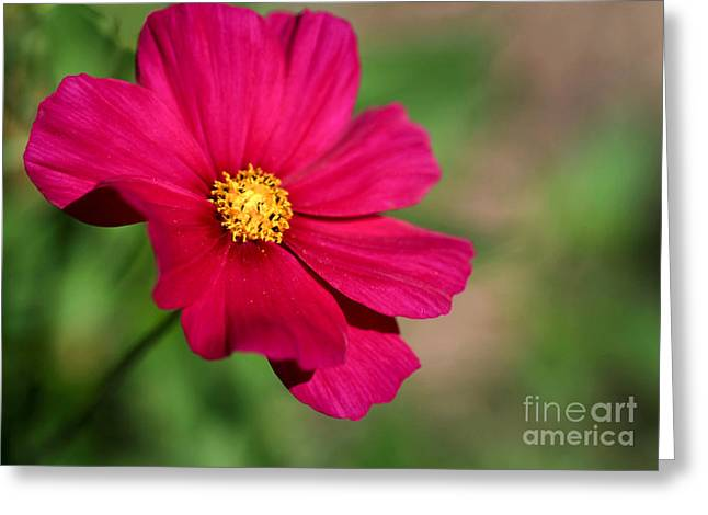 Florida Flowers Greeting Cards - Cosmopolitan Greeting Card by Sabrina L Ryan