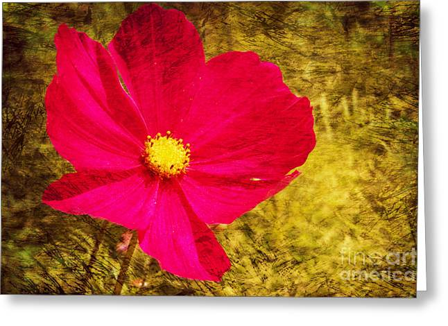 Bunt Greeting Cards - Cosmos bipinnatus Greeting Card by Angela Doelling AD DESIGN Photo and PhotoArt