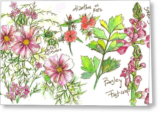 Journal Drawings Greeting Cards - Cosmos Flower Nature Page  Greeting Card by Cathie Richardson