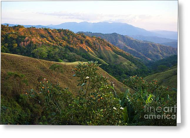 Costa Greeting Cards - Costa Rica Vista II Greeting Card by Madeline Ellis