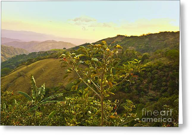 Costa Greeting Cards - Costa Rica Vista Greeting Card by Madeline Ellis