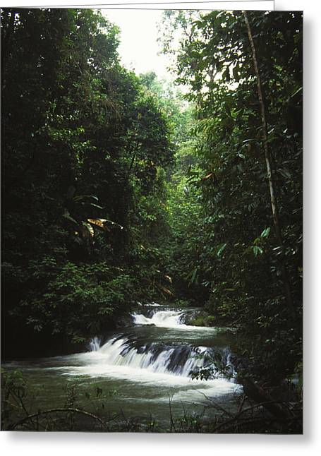 Costa Greeting Cards - Costa Rica Waterfall In The Carocavado Greeting Card by James Forte