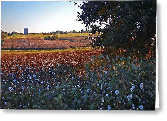 Watermelon Digital Art Greeting Cards - Cotton and the 2 Silos Greeting Card by Michael Thomas