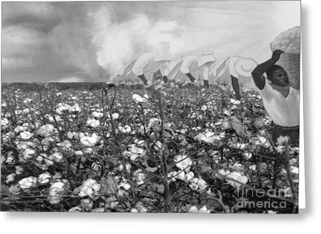 Cotton Field Greeting Card by Belinda Threeths