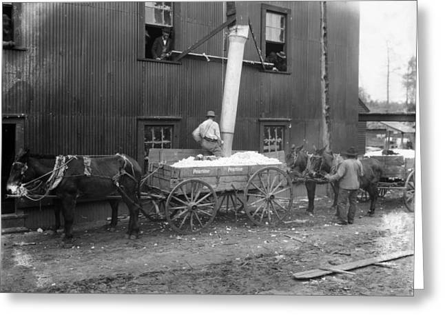 Best Sellers -  - Textile Photographs Greeting Cards - Cotton Ginning, 1902 Greeting Card by Granger
