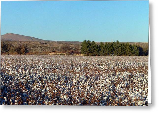 Not In Use Greeting Cards - Cotton Landscape Protected 02 Greeting Card by Feile Case