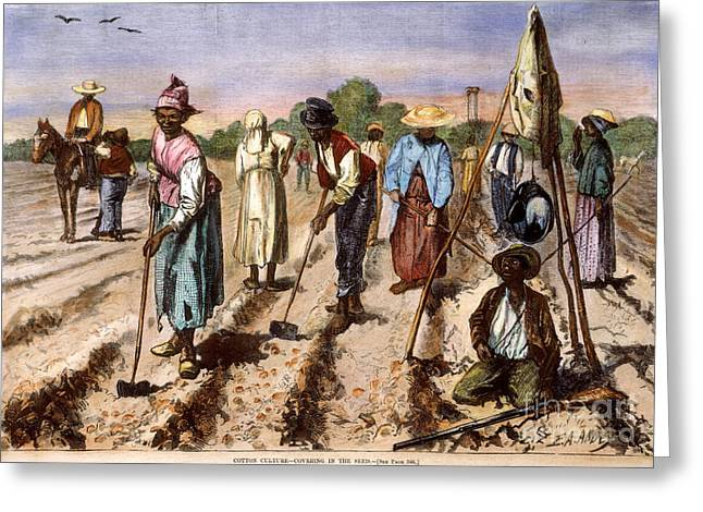 Sharecropper Greeting Cards - Cotton Plantation, 1875 Greeting Card by Granger