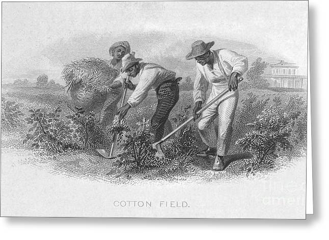 Sharecropper Greeting Cards - Cotton Plantation Greeting Card by Granger