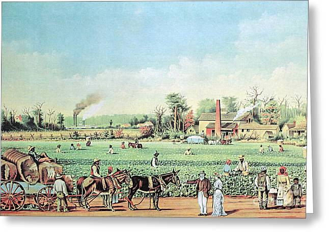 Negro Greeting Cards - Cotton Plantation On The Mississippi Greeting Card by Photo Researchers