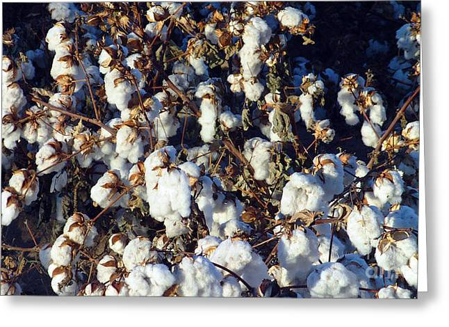Not In Use Greeting Cards - Cotton The Thread That Binds Greeting Card by Feile Case
