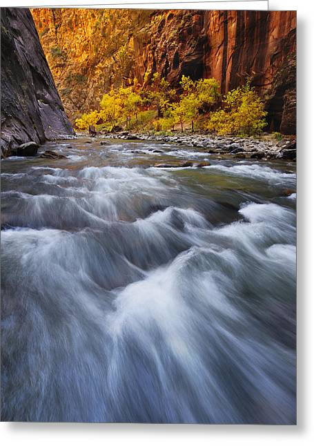 Zion Greeting Cards - Cottonwood Row Greeting Card by Joseph Rossbach