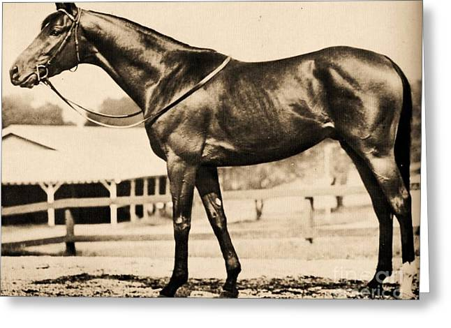Race Horse Greeting Cards - Count Fleet Greeting Card by Pg Reproductions