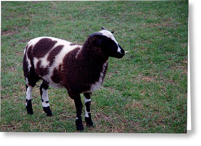 Colors Greeting Cards - Counting Sheep Number 1 Greeting Card by LeeAnn McLaneGoetz McLaneGoetzStudioLLCcom