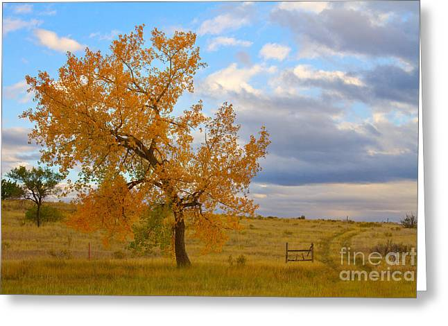 Country Framed Prints Greeting Cards - Country Autumn Landscape Greeting Card by James BO  Insogna