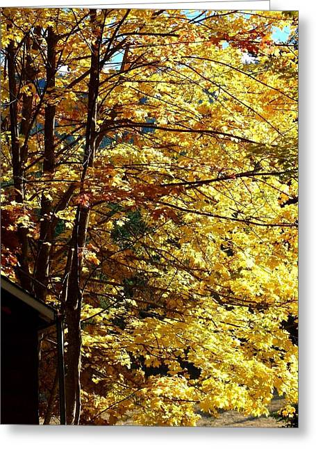 Empty Eyes Greeting Cards - Country Color 22 Greeting Card by Will Borden