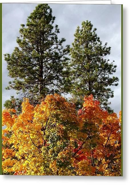 Country Color 24 Greeting Card by Will Borden