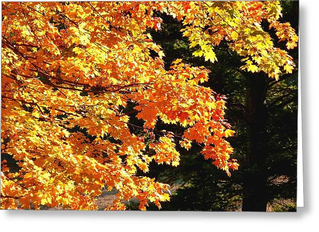 Fir Trees Greeting Cards - Country Color 26 Greeting Card by Will Borden