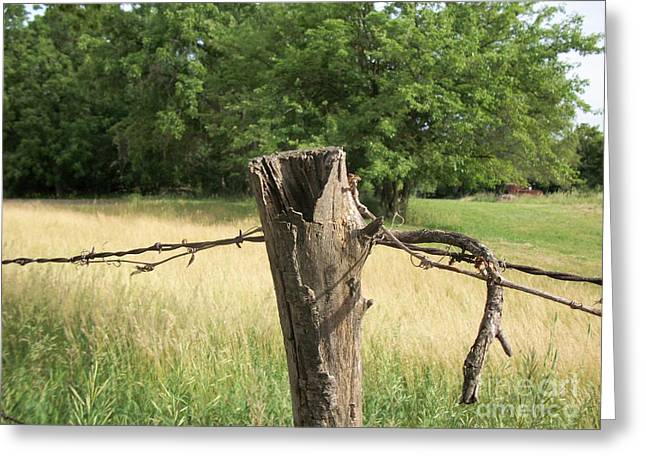 Wire Tree Greeting Cards - Country Fence Post ll Greeting Card by Marsha Heiken