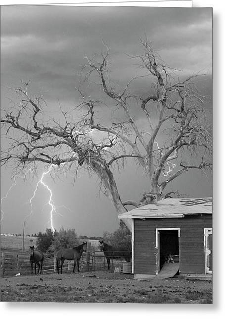 Storm Prints Greeting Cards - Country Horses Lightning Storm NE Boulder County CO 66V BW Greeting Card by James BO  Insogna