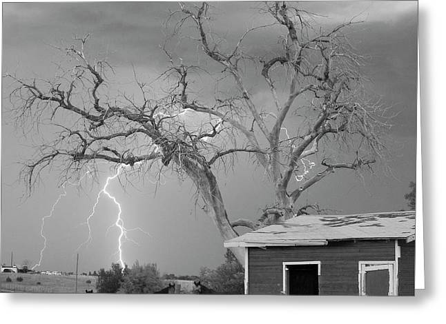Images Lightning Greeting Cards - Country Horses Lightning Storm NE Boulder County CO 66V BW Greeting Card by James BO  Insogna