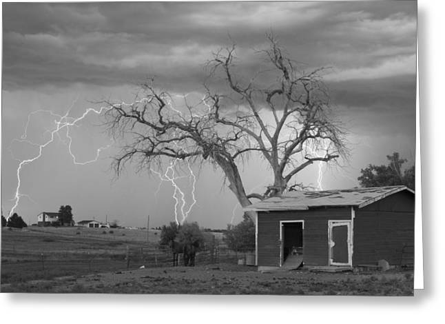 Lightning Strike Greeting Cards - Country Horses Lightning Storm NE Boulder County CO  76BW Greeting Card by James BO  Insogna