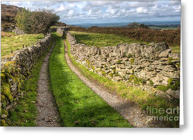 Gravel Road Digital Art Greeting Cards - Country Lane Greeting Card by Adrian Evans