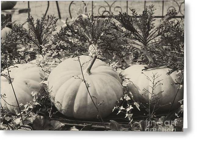 Farm Stand Greeting Cards - Country Pumpkins In Black And White Greeting Card by Smilin Eyes  Treasures