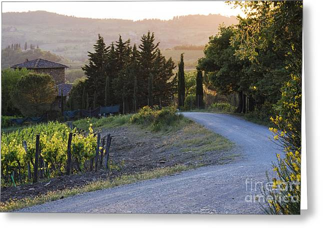 Chianti Hills Photographs Greeting Cards - Country Road at Sunset Greeting Card by Jeremy Woodhouse