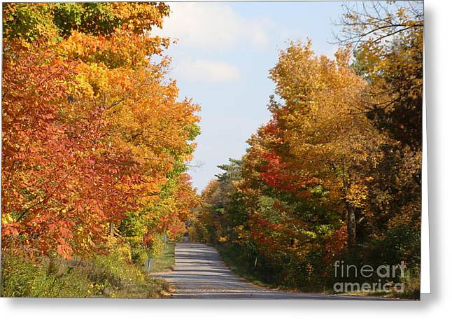 Country Road Greeting Card by Beverly Livingstone