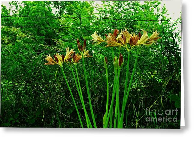 Botony Greeting Cards - Country Yellow Lilies Greeting Card by Marsha Heiken