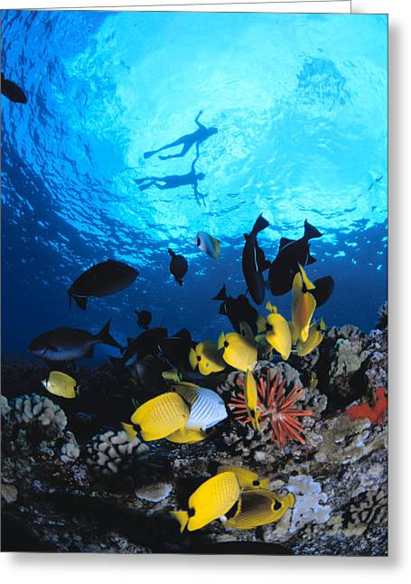 Snorkeling Photos Greeting Cards - Couple Snorkels At Surfac Greeting Card by Ed Robinson - Printscapes