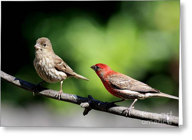 Courtship In Nature . 40D8073 Greeting Card by Wingsdomain Art and Photography