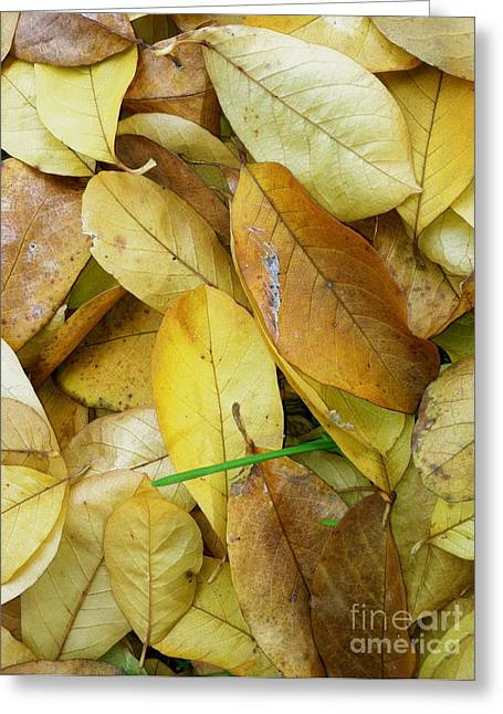 Foliage Photographs Greeting Cards - Covering The Green Greeting Card by Trish Hale