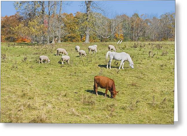 Maine Agriculture Greeting Cards - Cow Horse Sheep Grazing On Grass Farm Field Maine Photograph Greeting Card by Keith Webber Jr