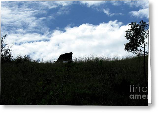 The Hills Greeting Cards - Cow in the clouds Greeting Card by Marcelo Gomez