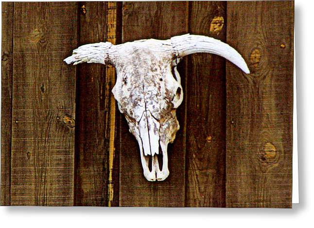 Cattle Photographs Greeting Cards - Cow Skull Greeting Card by Tam Graff