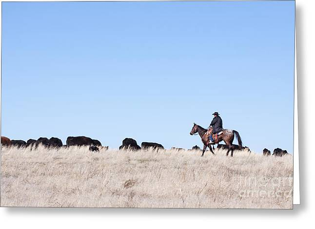 Working Cowboy Photographs Greeting Cards - Cowboy and Cattle Greeting Card by Cindy Singleton