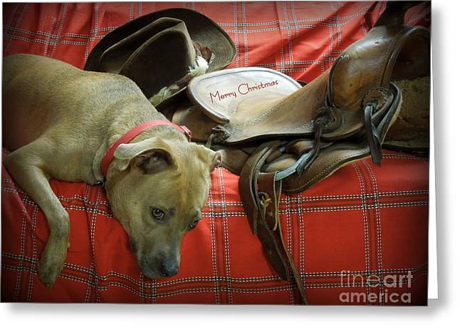 Apbt Greeting Cards - Cowboy Christmas Greeting Card by Renee Trenholm